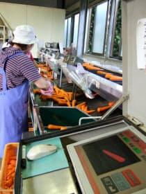 コンベヤーに載ったニンジンが次々と袋詰めされる松本農園の出荷場(熊本県益城町)