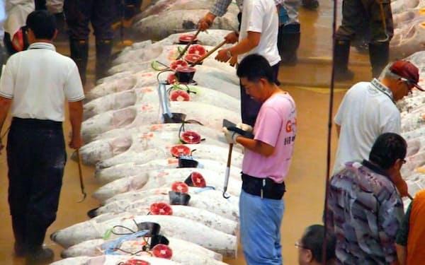 三崎港の市場ではマグロのセリを見学できる