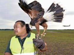 離着陸時の航空機に鳥が衝突する「バードストライク」対策のため、鷹匠の協力で鳥の追い払いを試験的に行った(11日、成田空港)=共同