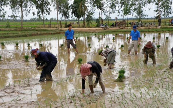 木徳神糧はベトナムの契約農家が作ったコメを世界に輸出している