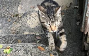 至る所で猫に出会える(広島県尾道市の猫の細道)