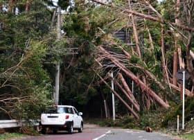 台風15号では倒木による停電が多かった