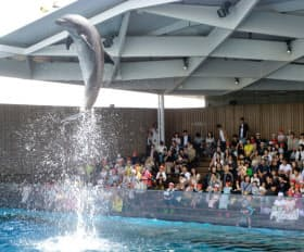 イルカのパフォーマンスが人気を集めている