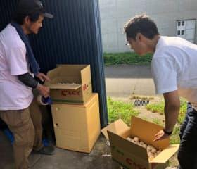 生産者がピッカーにもなりニンニクを集荷して回る(熊本県宇土市)