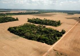 農地拡大のための森林伐採によって森林面積が急減している(ブラジル)