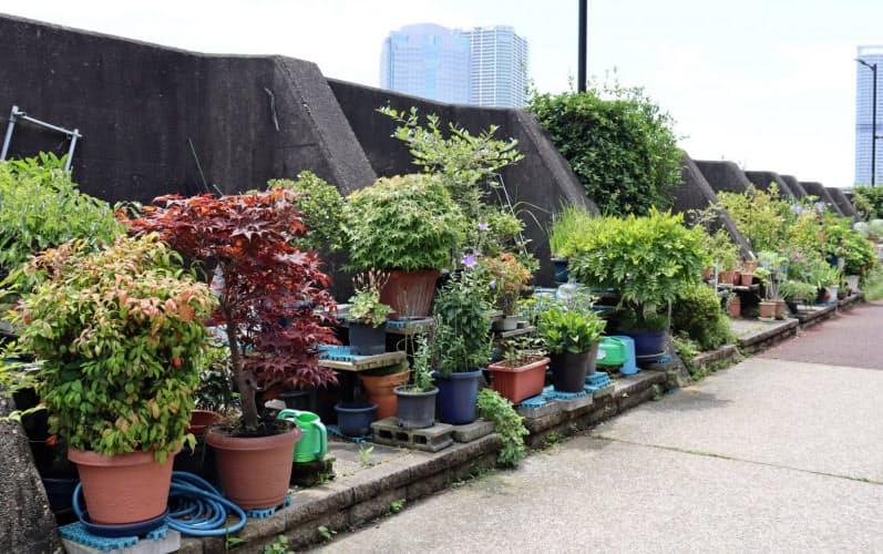 ごみの不法投棄対策のため、堤防沿いに植木鉢を置き始めたという(東京都中央区)