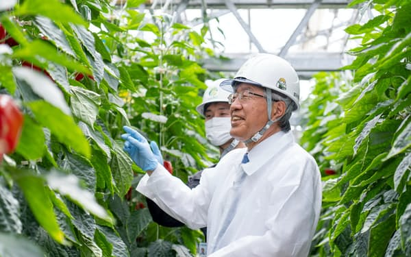 スマート農業の研究開発を行う農研機構植物工場(茨城県つくば市)でパプリカの栽培を視察(手前が久間氏)