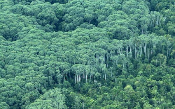 海外で森林保全や植林に取り組む日本企業も多い(インドネシア・スマトラ島)=ロイター