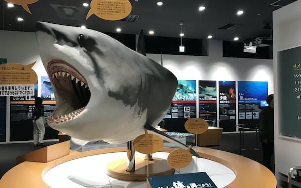 巨大なホホジロザメの復元模型が来訪者を出迎える
