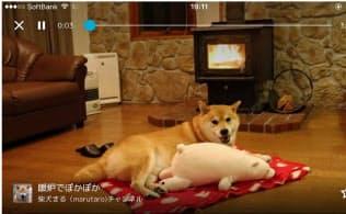 インスタグラムで230万人のフォロワーを持つ「柴犬まる」の番組(写真上)。同下は視聴イメージ