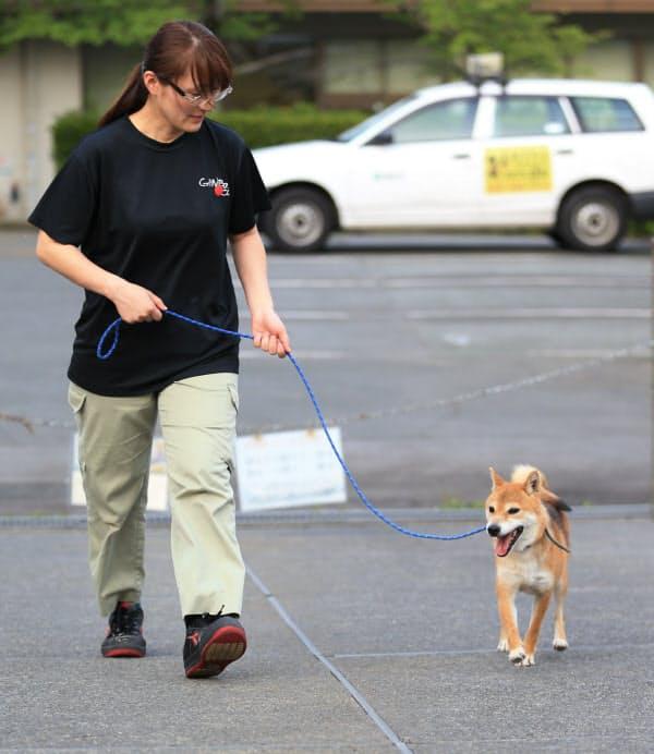 ストレスがたまらないよう、保護した犬の散歩をする熊本市動物愛護センターの溝端菜穂子さん(2日、熊本市東区)