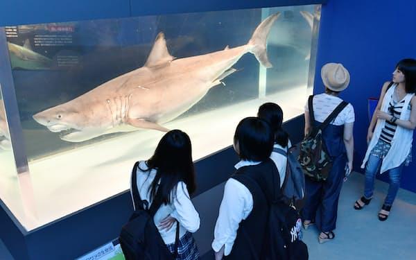 ホホジロザメの標本を見る人でにぎわう「海のハンター展」会場(8日午前、東京都台東区の国立科学博物館)=写真 伊藤航