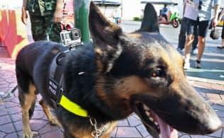軍用犬の背中に装着された小型カメラ「ゴープロ」。軽量なせいか犬もあまり気にならないようだ