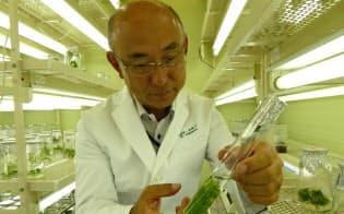 培養液で満たした試験管で育てる(茨城県つくば市の住友林業筑波研究所)