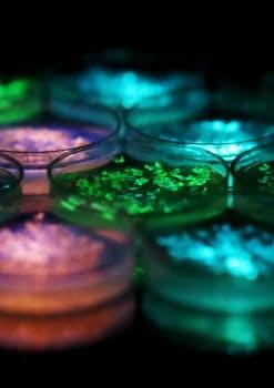 ナノランタンの遺伝子を組み入れたゼニゴケ=5秒間露光で撮影
