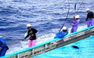 カツオ一本釣り漁は「選べる漁業」(明豊漁業提供)