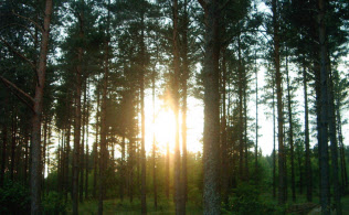 スウェーデンの自宅近所の森林で。明るい光をいつも求めていた。つらいときに森の中を歩くと癒やされた