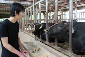 子牛の仕入れ値は高騰している(滋賀県・加賀屋牧場)