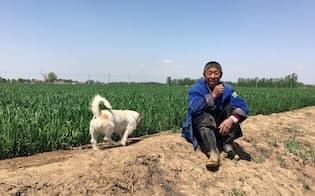 中国・河北省ののどかな土地は人口数百万人の大都市に生まれ変わる(「雄安新区」の建設予定地域で)=撮影・多部田俊輔