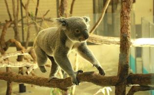 動物園では餌代の上昇が経営を圧迫している(東京都日野市の多摩動物公園)
