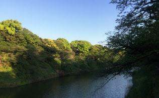 桜から新緑に(千鳥ケ淵で、筆者撮影)