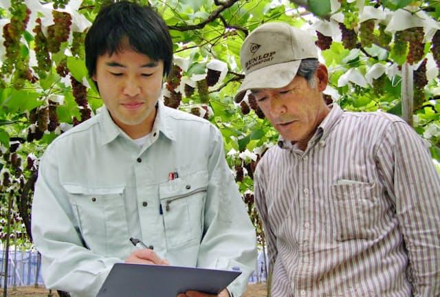GAPを取得するには、農薬散布の量や日時など生産工程の記録を細かく残さなくてはならない(大阪府羽曳野市のブドウ農家)