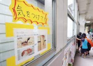 小学校の廊下に貼られたヒアリへの注意喚起の紙(4日、大阪市住之江区の南港光小学校)