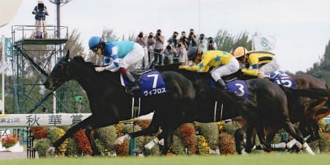 今年のドバイ・ターフを勝ったヴィブロスの日本国内でのG1勝利は3歳牝馬限定の秋華賞だけだ(16年10月16日、京都競馬場)=JRA提供