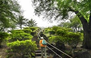 戸山公園内にある人造の山「箱根山」(東京都新宿区)