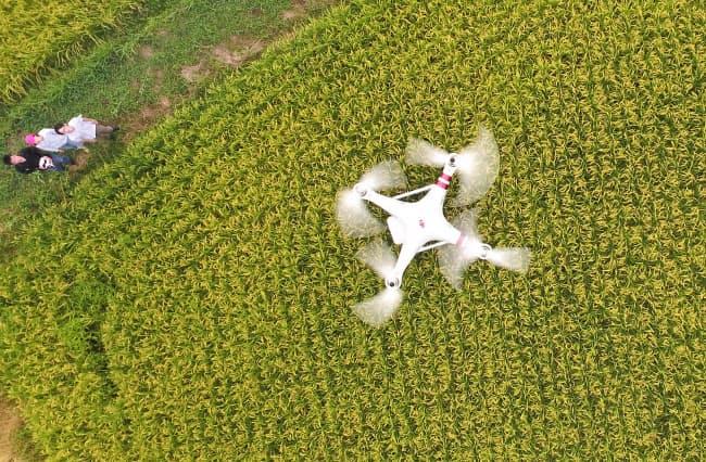 上空にドローンを飛ばし、人の目では見落としがちな田んぼ中心部にある病虫害も調べる(兵庫県丹波市)=ドローンで撮影