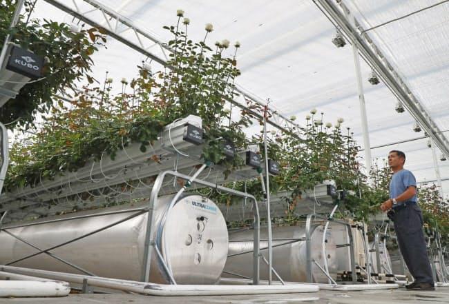 温室は全面ガラス張り。20品種を栽培し、年間400万本の出荷を目指す