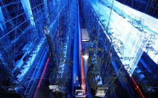 夜間、トマト畑で青い光を照射し生育状況を調べるロボット。農業と先端技術を融合したアグリテックが各地に広がっている(松山市の愛媛大学)=10分間露光、山本博文撮影