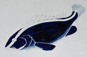 完成したプルシアンブルーで描いた「ルリハタ」の図