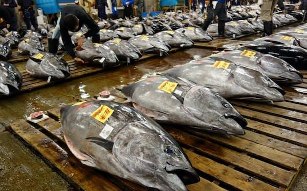 クロマグロの漁獲枠拡大は一段と厳しい条件になる(東京・築地市場)
