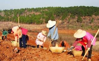 原料生薬の安定調達を目指す(中国の生薬農家)