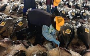 大型まき網漁船へのクロマグロ漁獲枠配分の見直しを求める声も根強い(鳥取県境港)