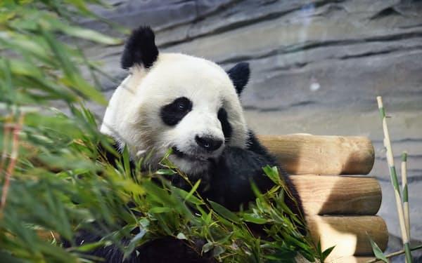 ドイツはパンダで中国と急接近?(ベルリン動物園)