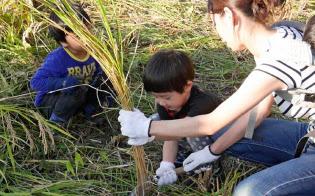 生産者を訪れ稲刈りを体験するネット通販の利用者家族