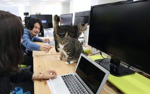 社内で2匹の猫を飼うみんなのマーケット(東京都品川区)