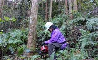 森林組合に伐採を依頼する所有者は多い(宮崎市)