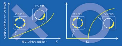 ホタルの明るさは円をぐるぐると回るように変化する。円の一番上にあるときに最も明るく、一番下にあるときは真っ暗で,これを交互にくり返す(上)。個々のホタルが「周りを見る度合い」が大きくなっていくと,全体の点滅リズムが次第に揃っていくような気がするが、実際にはそうではなく、ある程度大きくなったときに突然全体が同期する。