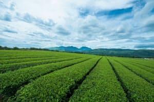 茶葉の農家は減少しており、作業の効率化が喫緊の課題