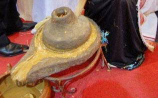 モロッコに自生する「アルガン」。実から抽出するオイルは世界でヒット商品に=ANDZOA提供