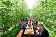 岩手県遠野市ではホップ畑でビールを楽しむツアーなどを増やす構想が進む