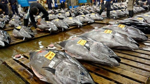太平洋クロマグロ、水産庁の内憂外患