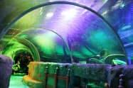 報道陣に公開されたレゴランドの水族館(8日、名古屋市港区)