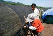 ツムラは中国での現地調達や分析の体制を強化し、ブランド浸透を目指す(中国の生薬農家)