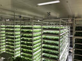 LEDでレタスを育てるMIRAIの植物工場(千葉県柏市)