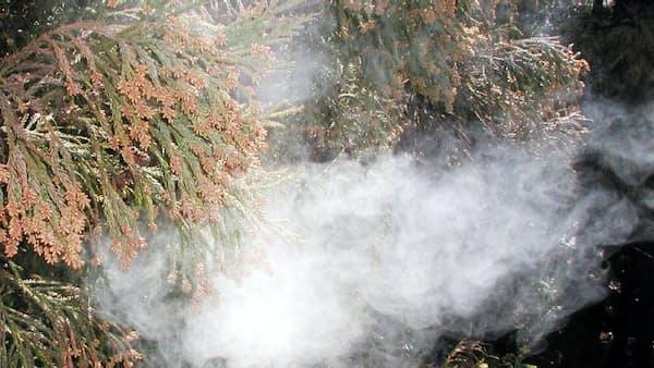 花粉症対策、林業不振が壁 スギ新品種植え替え進まず