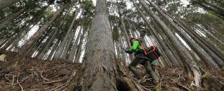 レーザースキャナーを背負い、森林の3Dデータを測定して歩くウッドインフォの女性社員(埼玉県秩父市)=小園雅之撮影